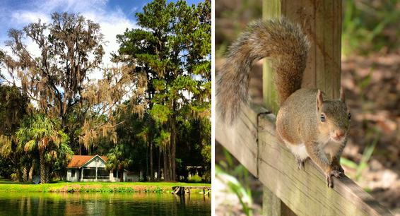 Nature en Floride