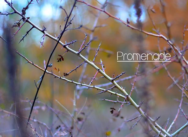 automne promenade