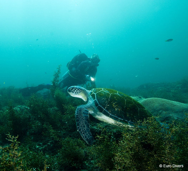 plongée à Oman