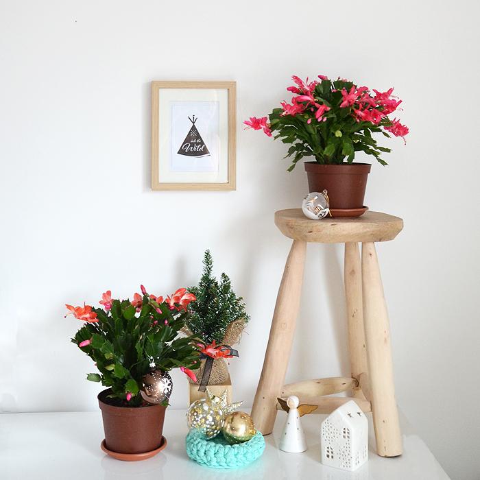rendez-vous bonheur plantes