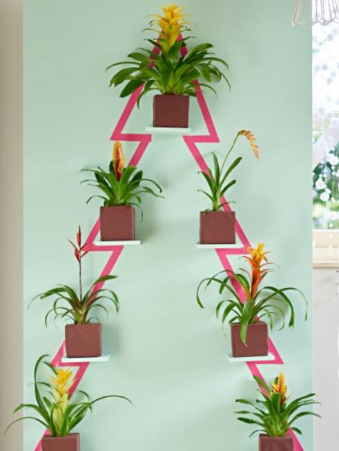 sapin plantes